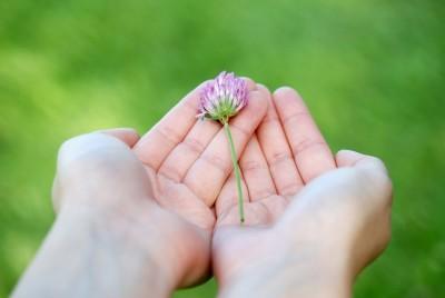 flower-8539_960_720