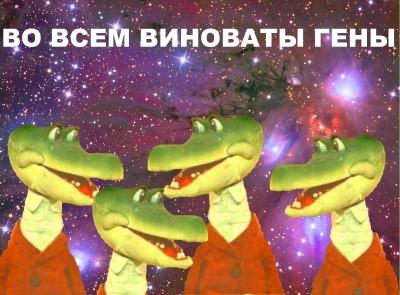 nim_KdIjRaY