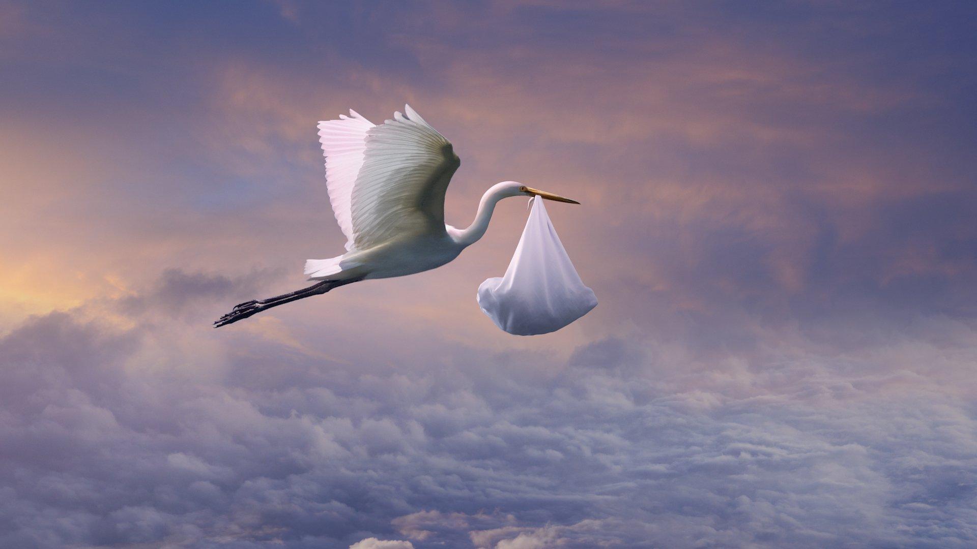открытки аист летящий бессмертная птица, жизнь